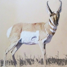 Eileen Nistler colored pencil American Plains Artists Signature Member