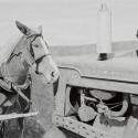 Goss, Tim Horse Power Meets Horsepower Graphite