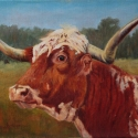 Ingram, Sandy Longhorn Sally Oil 12x16