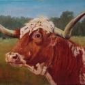 Ingram, Sandy Longhorn Sally Oil 12x16