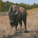 Lundeen, Carol Before the Spring - Cow BisonOil 16x16