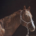 Mueller Dick Shoofly's Horse Colored Pencil 16x13