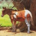 Sarka, Drew Seeking Shade Oil 18x24