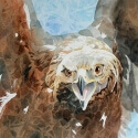 Heron FritziEye on the Prize WC 13 x 19 $1,800.00
