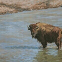 Lundeen, Carol Last One to Cross - Cow Bison Oil 12x16 $650.