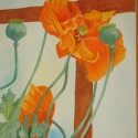 Stevenson Marvin Orange Poppies WC 10 x 14 $950.00