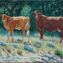 Scheidt, Bill Heifer and Cow Oil 11x14