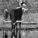 Best Plains Life $200 Linda Kay Mayfield Reflection