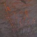 Golden Spur Award Artists Choice $250 Judy McElroy Crane Sunrise Acrylic 24 x 12 $2,400.00