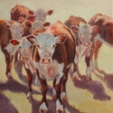 Leese, Alice Sand Ranch Herefords Oil 8x10 $800.