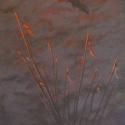 McElroy Judy Crane Sunrise Acrylic 24 x 12 $2,400.00
