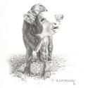 McElroy Judy Got Milk Pencil 9 x 8.5 $1,200.00