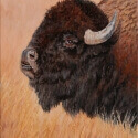 Roush, Cheryl Eye of the Buffalo Oil 8x10 $725.