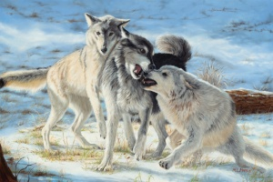Mary Lou Pape American Plains Artists Plainsmen award winner and best plains wildlife award 3 wolves in snow titled Greetings